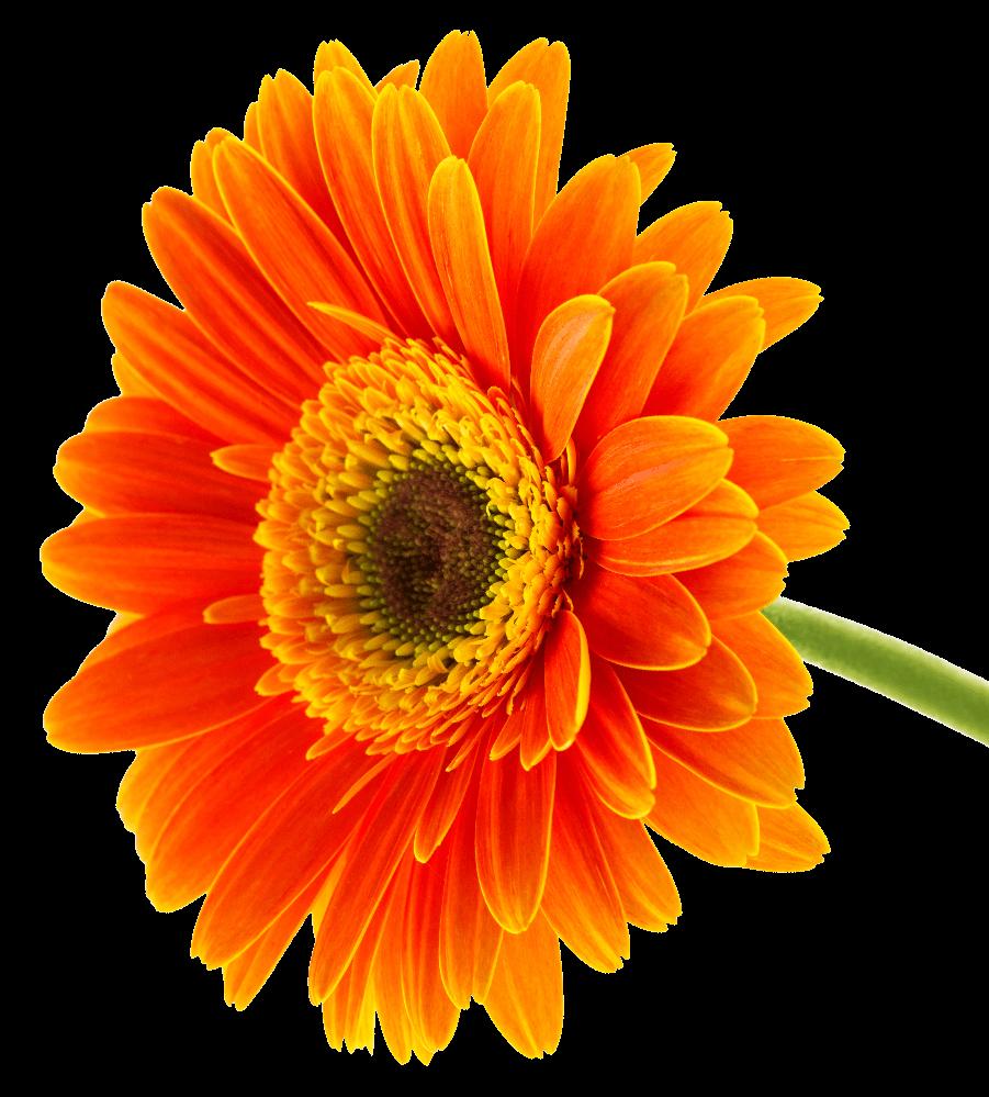 fiore-arancione-dual-trend2