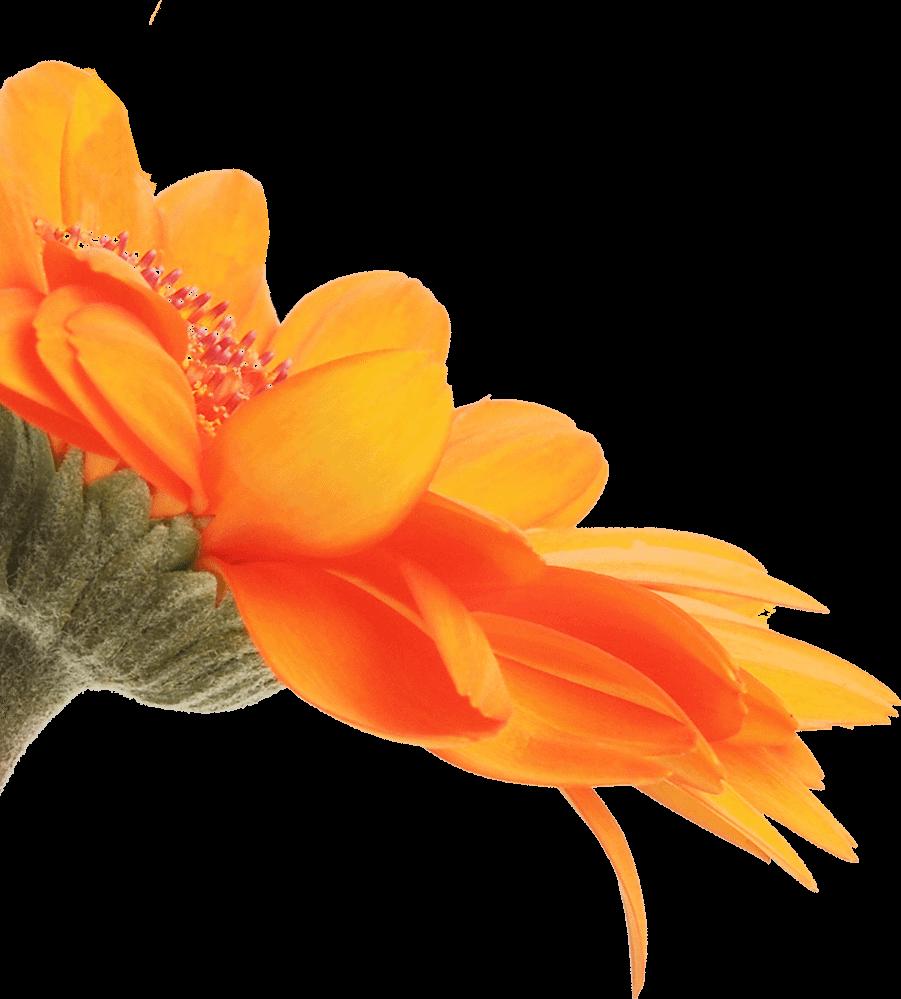 fiore arancione dual trend